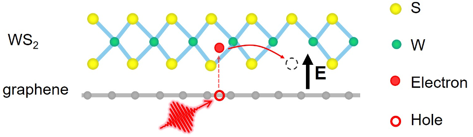 Defects to the rescue in graphene/WS2 heterostructures